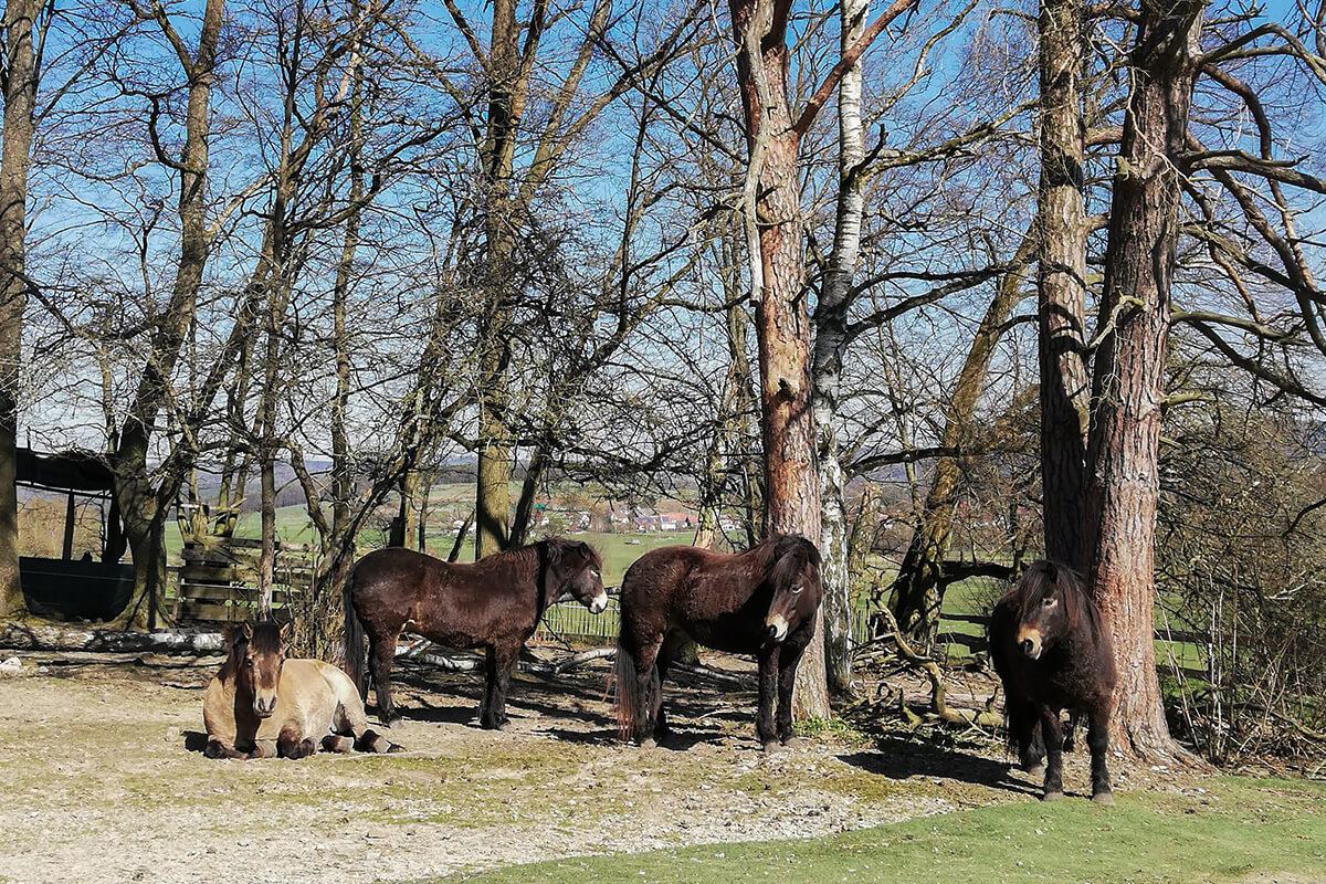 Wilde Ponies in Haunetal